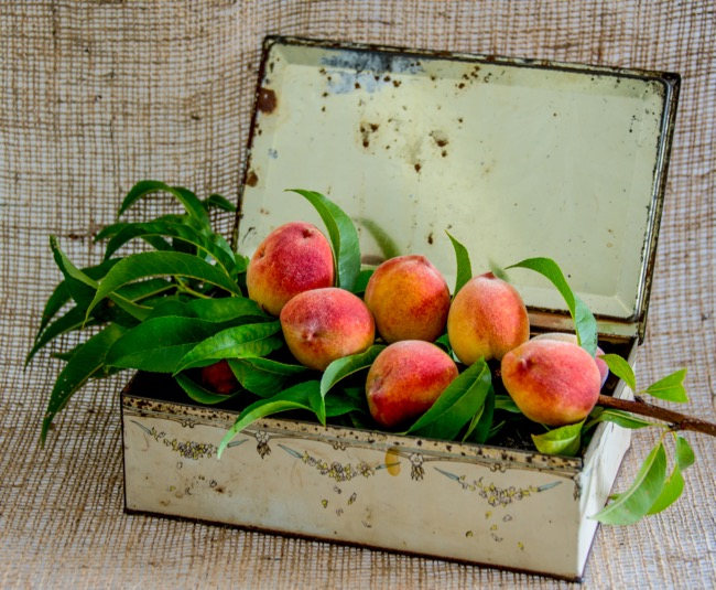 From the peach tree